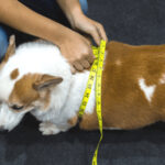 How Can I Help My Dog Lose Weight