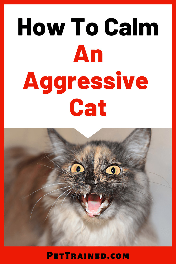 How To Deal With An Aggressive Cat