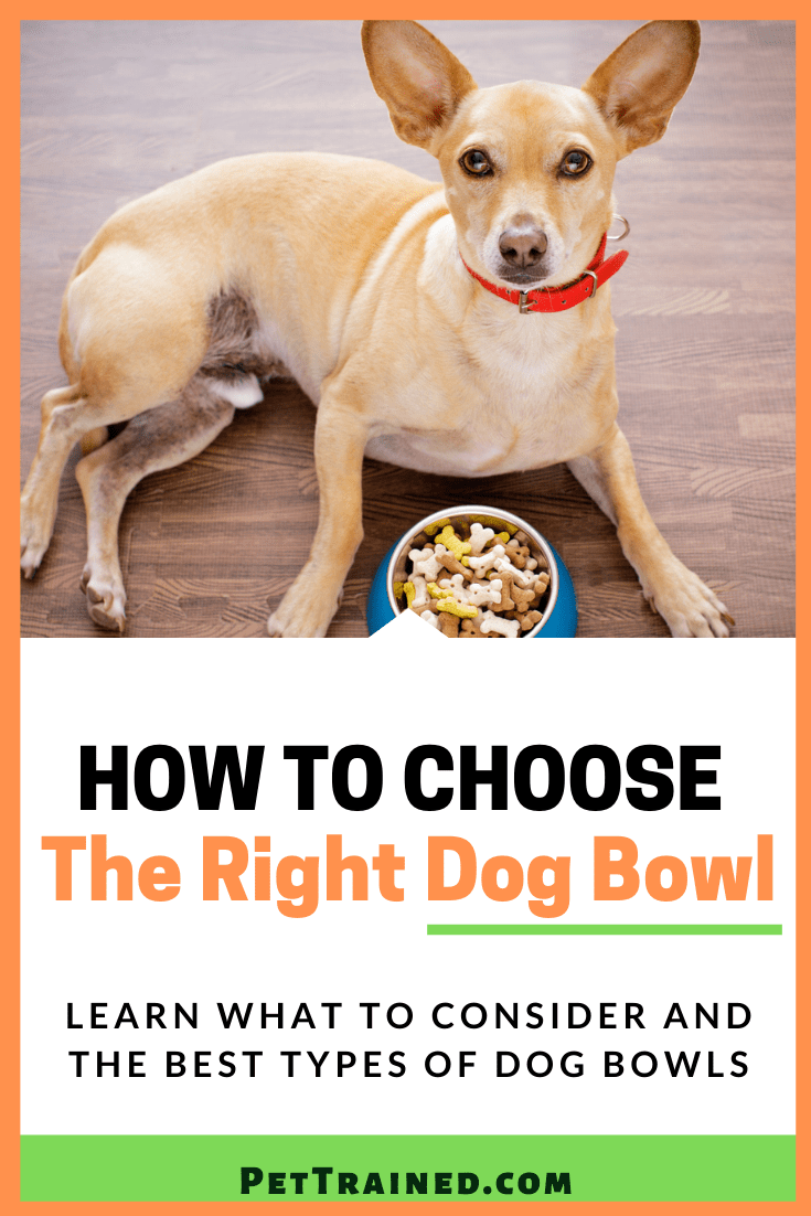 How To Choose The Right Dog Bowl For A Dog