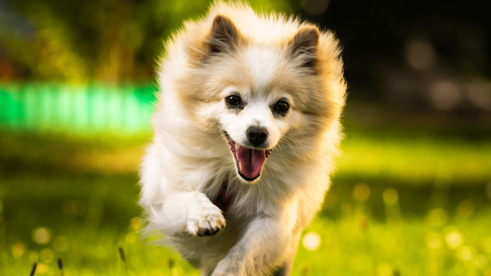 How To Keep Your Dogs Joints Healthy