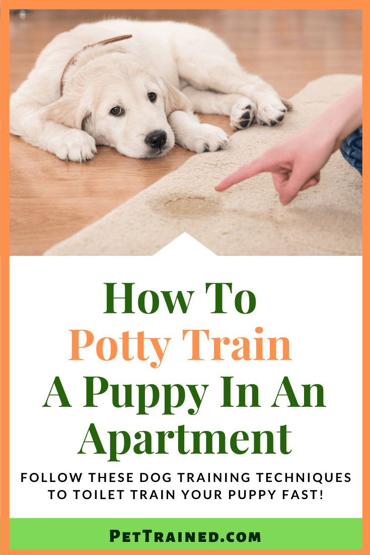 How To Potty Train A Puppy In An Apartment Fast