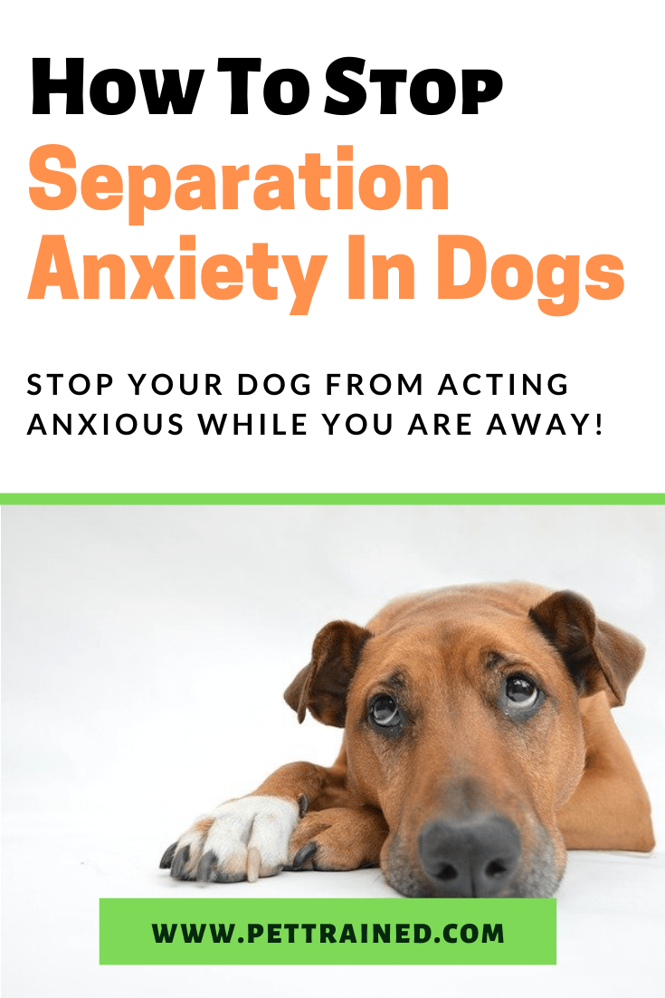 How To Stop Dog Separation Anxiety Effectively