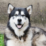 How To Choose The Best Dog Food For Large Breed