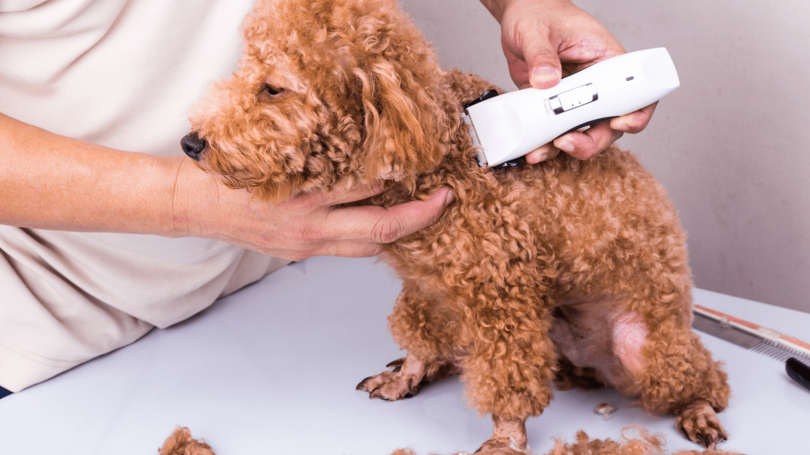 How to Groom A Dog At Home With Clippers