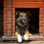 5 Tips On How To Choose A Dog Kennel For An Aggressive Dog