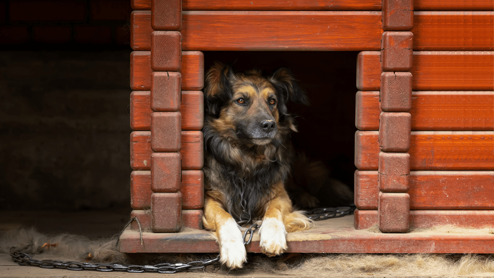 How to choose a dog kennel for an aggressive dog