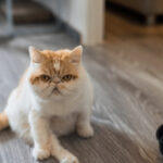 6 Tips On How To Get Rid Of Cat Odor In Apartment