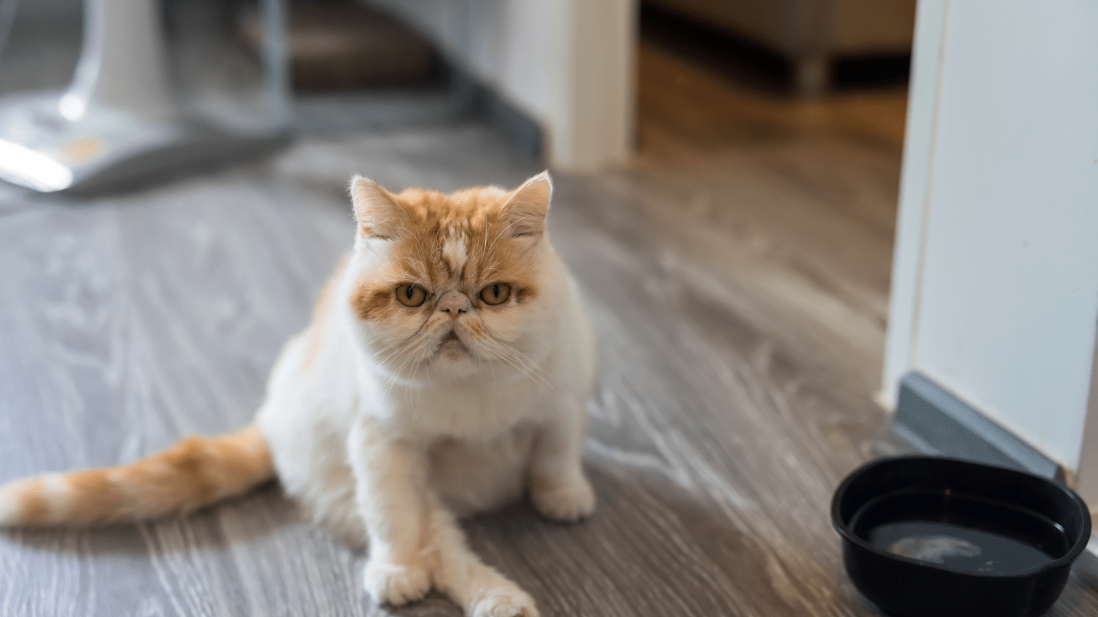 How to get rid of cat odor in apartment