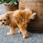 6 Tips On How To Get Rid Of Dog Urine Smell In The House