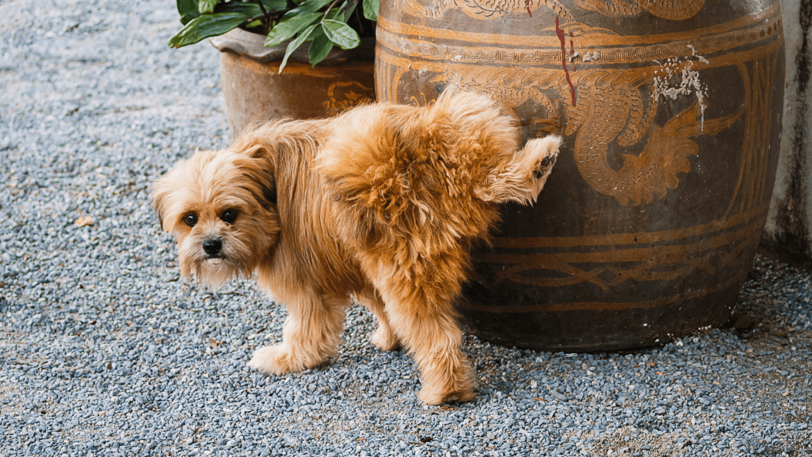 How to get rid of dog urine smell in the house