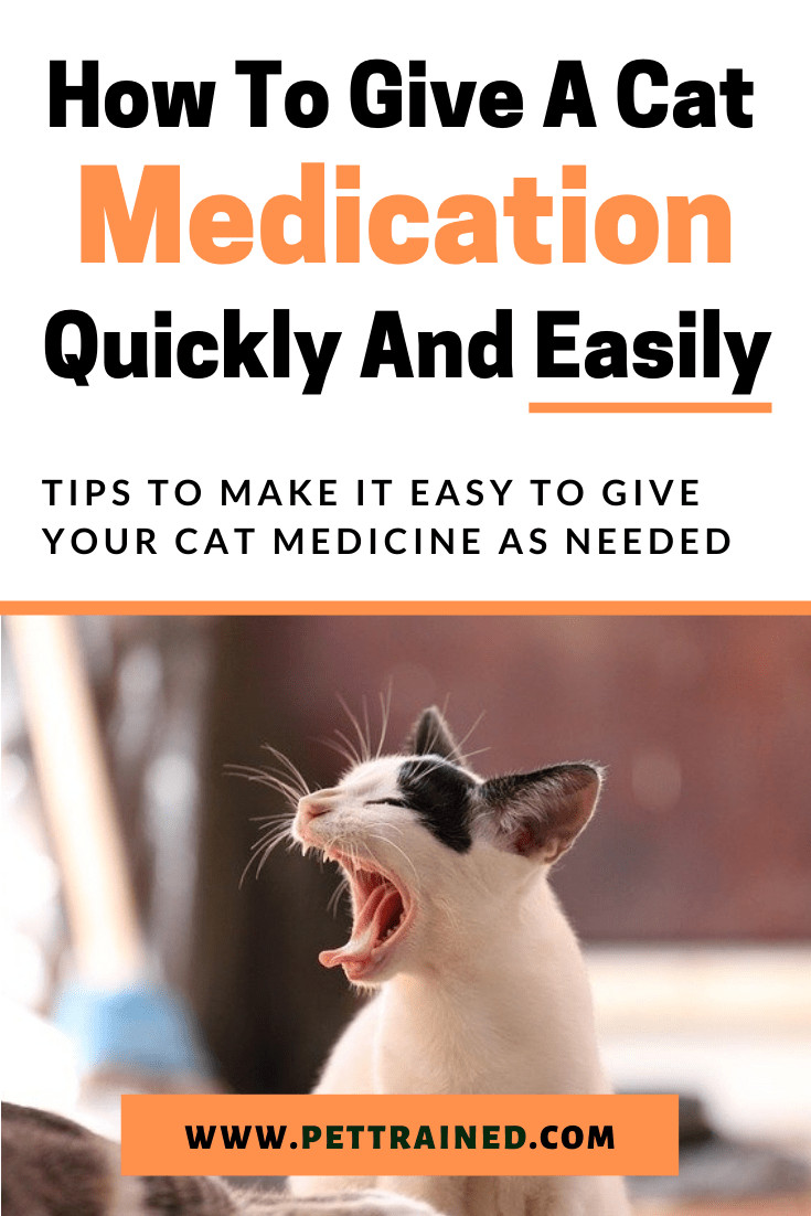 How to give a cat medication easily