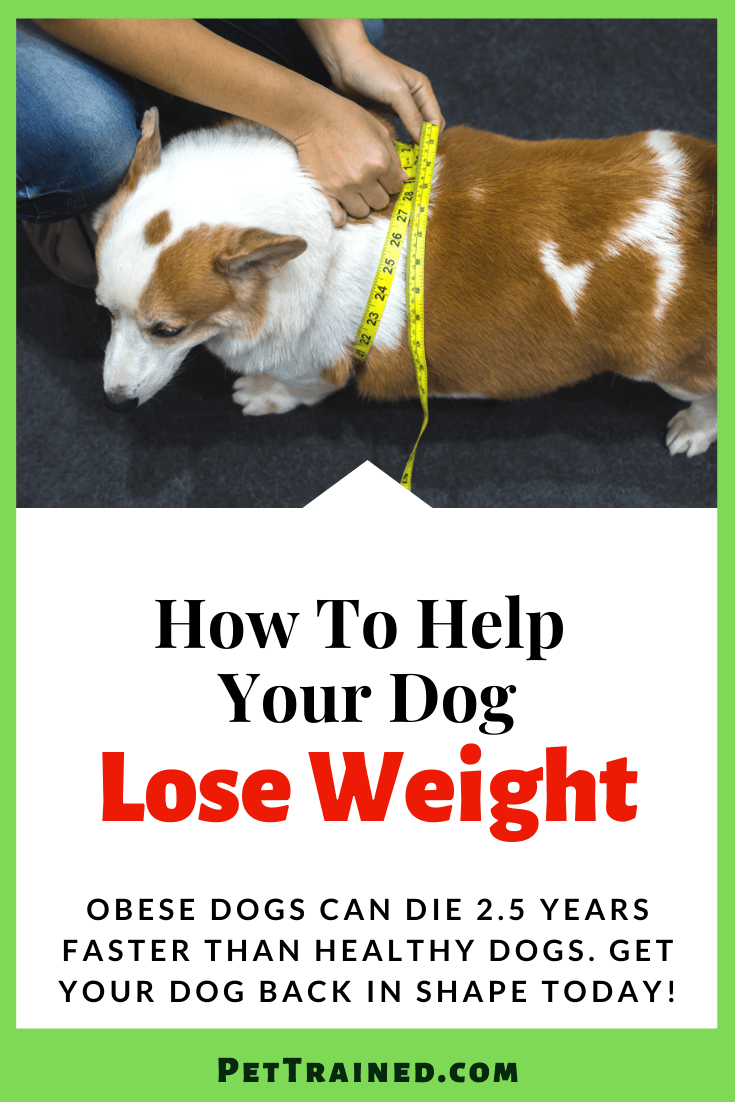 How to make My Dog Lose Weight
