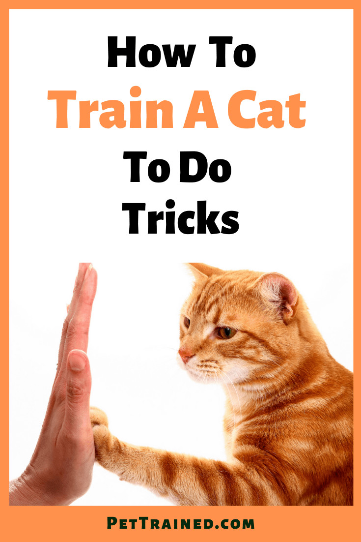 How to train a cat to perform tricks