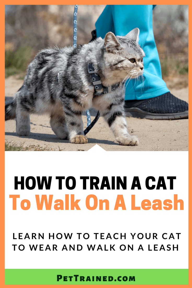 How to train your cat to wear a leash