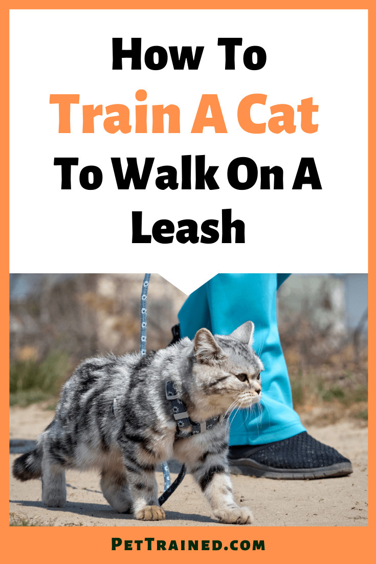 How to walk with your cat outdoors