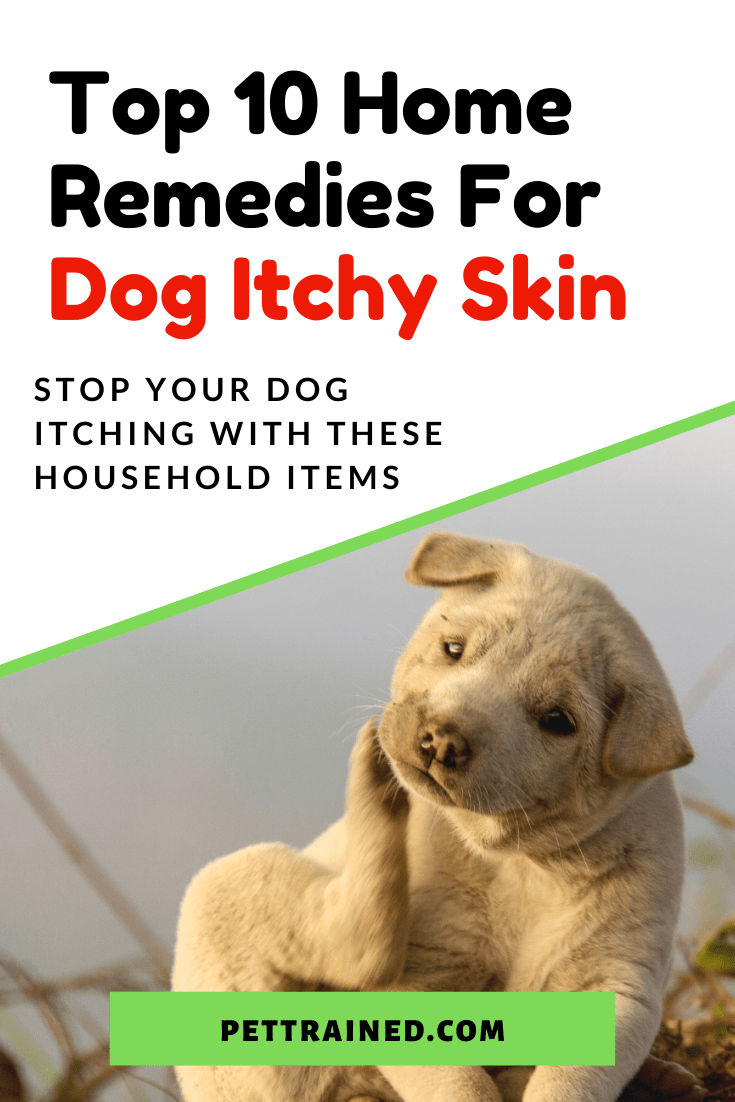 Natural Remedies To Help Your Itchy Dog