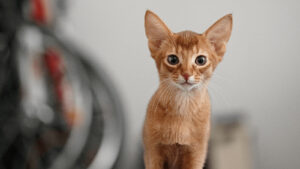 Tips On Choosing A Name For Your Cat