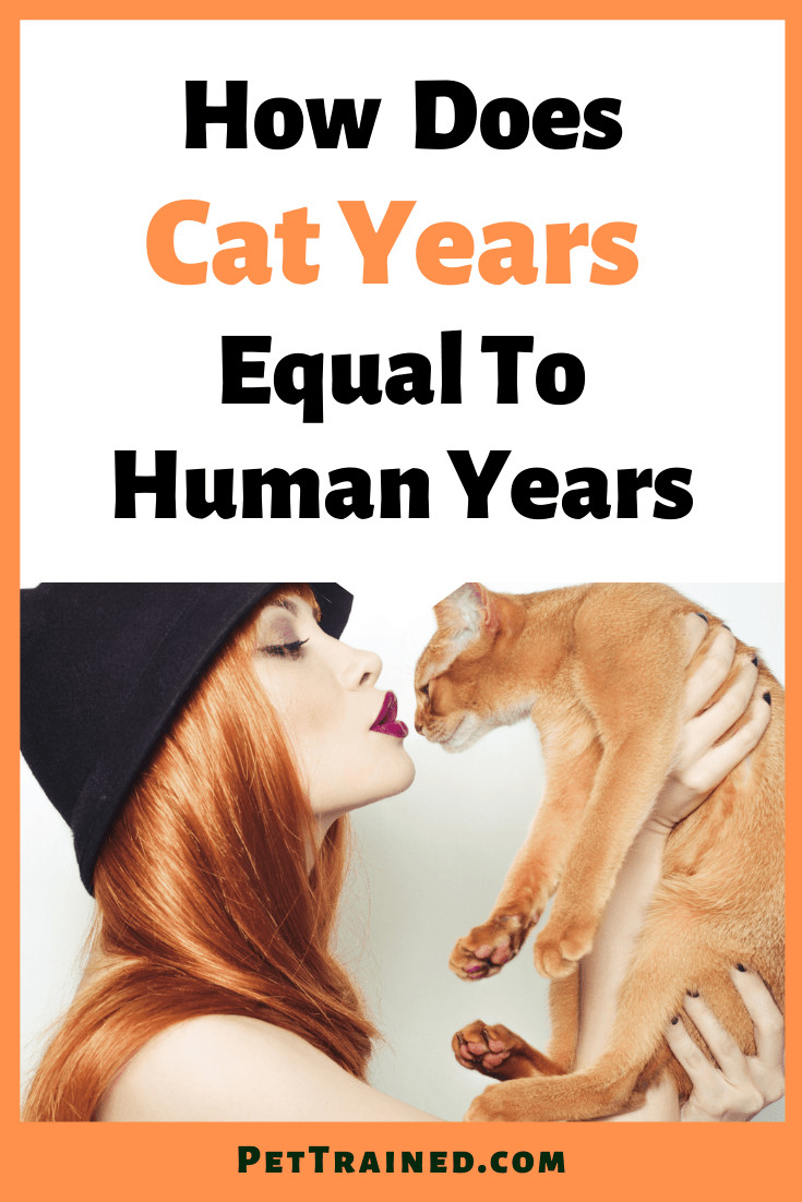 how many cat years are equivalent to human years