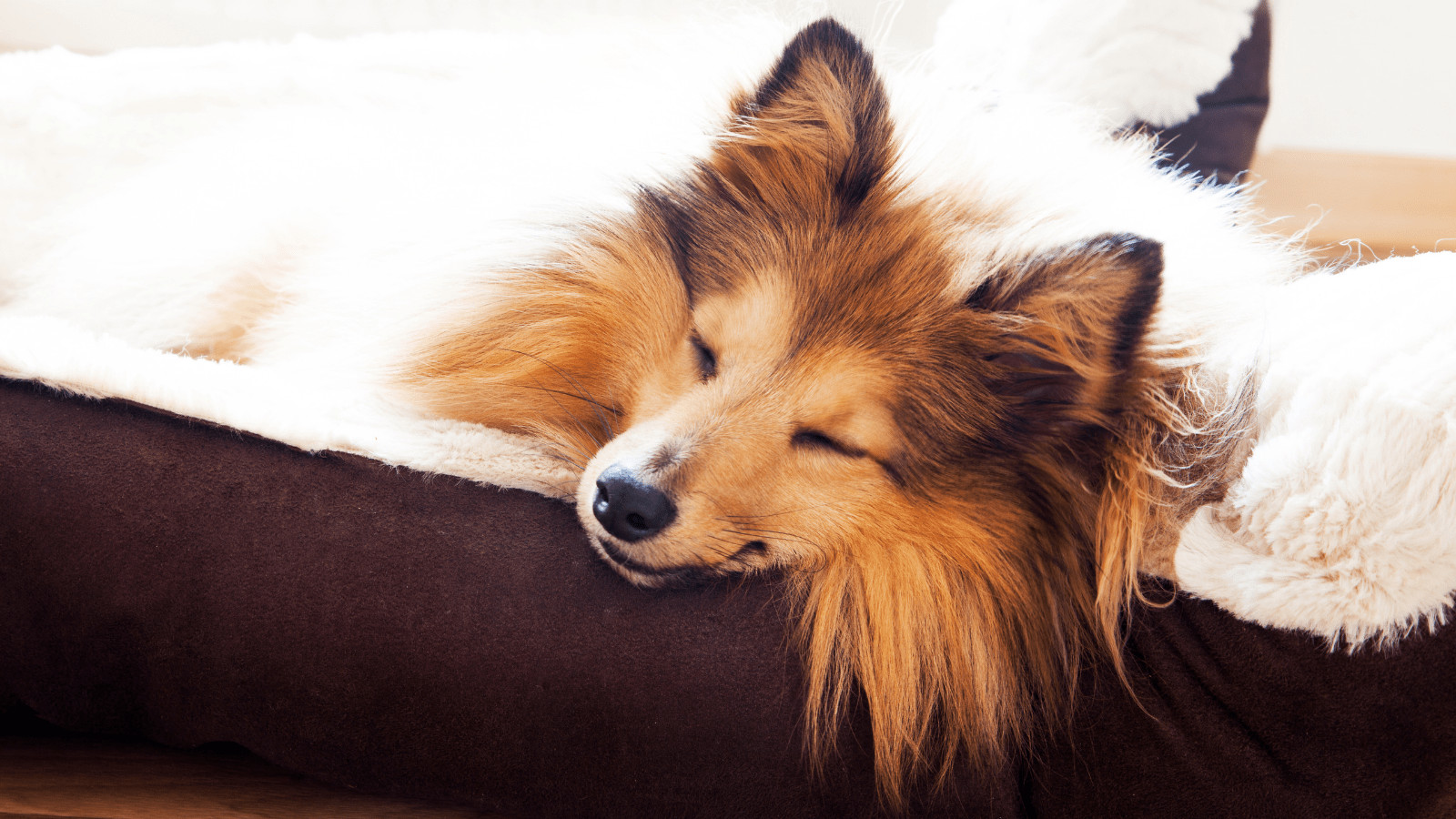 how to get a dog to stop sleeping in your bed