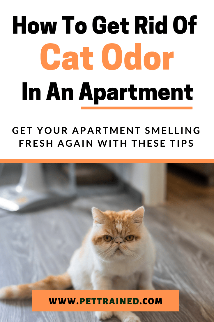 how to get cat urine smell out of an apartment