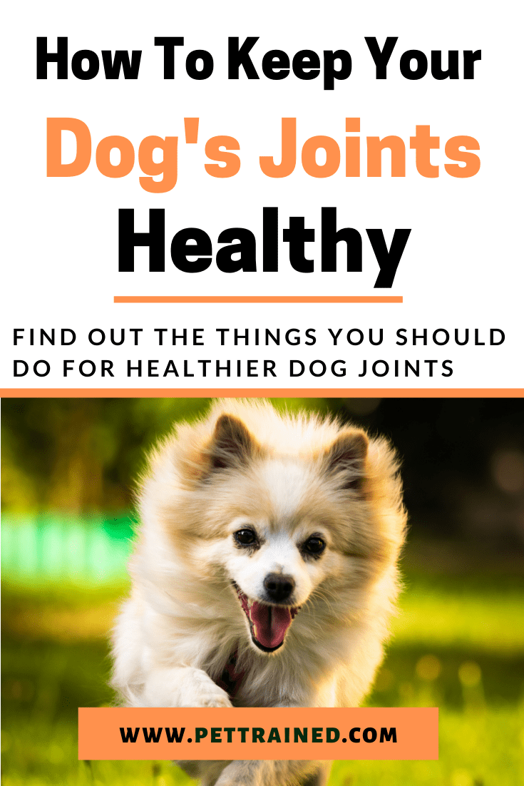 how to keep dogs hips healthy
