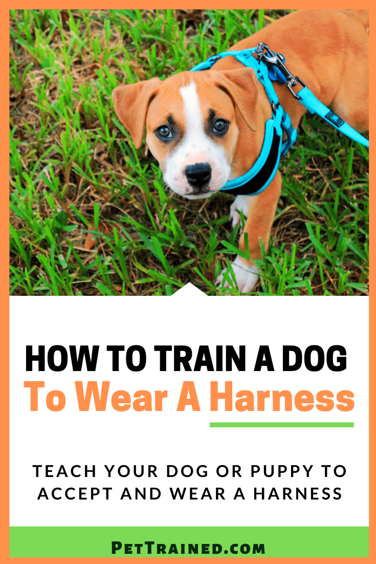 how to put on dog harness