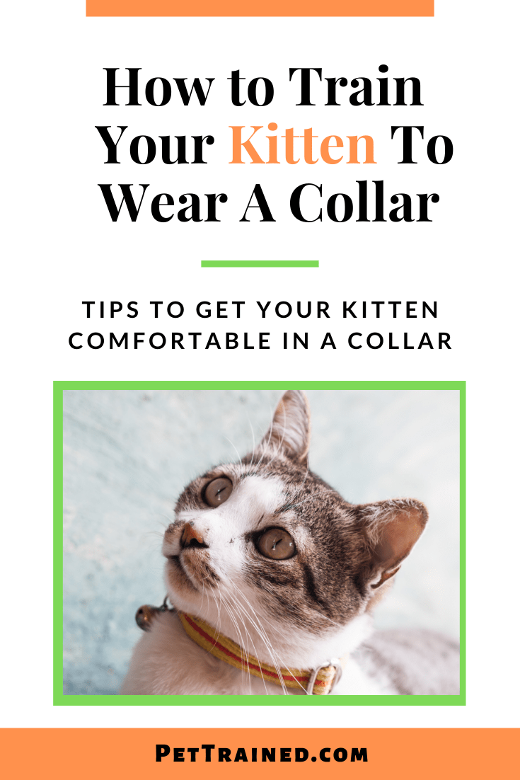how to train a kitten to wear a collar fast