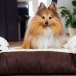 6 Tips On How To Train Your Dog To Sleep In A Dog Bed