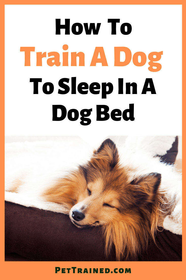 how to train your dog to sleep in a dog bed fast