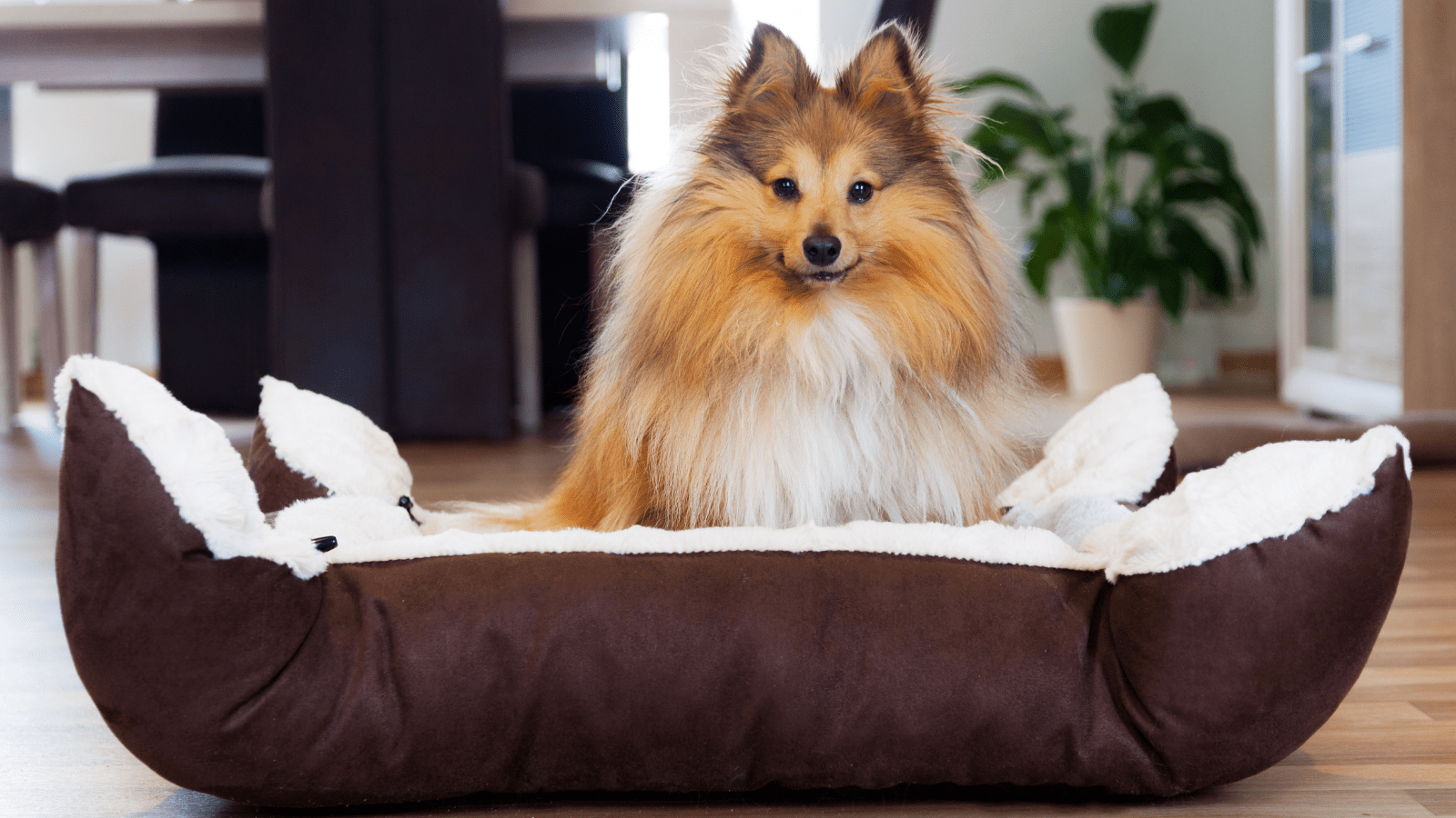 how to train your dog to sleep in a dog bed