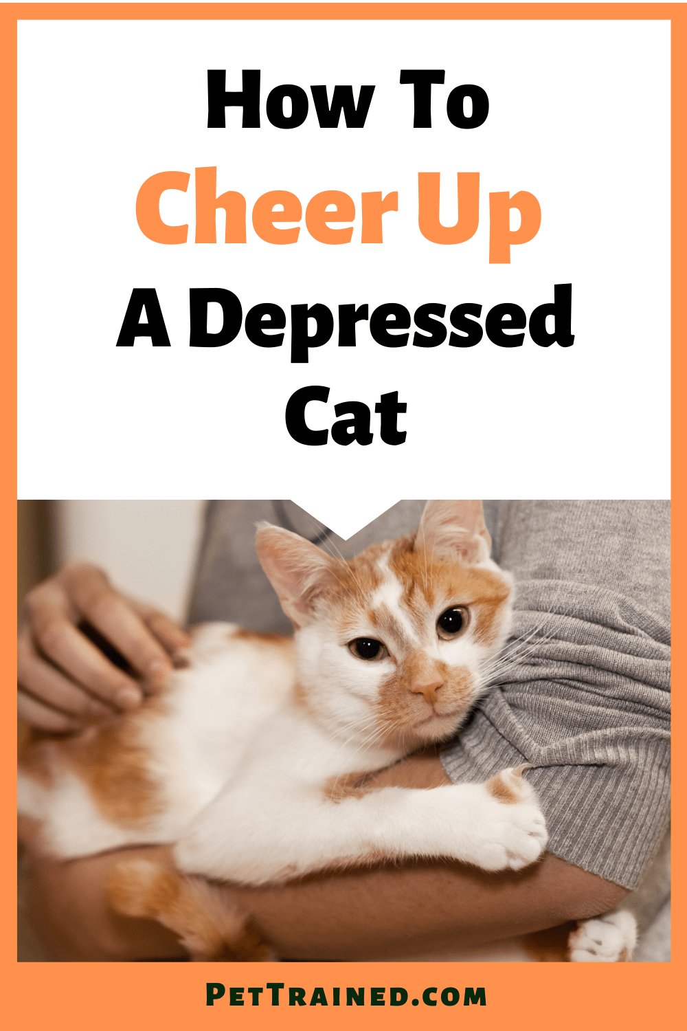 How to make a depressed cat happy