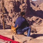 5 Step Guide On How To Train A Cat For Hikes