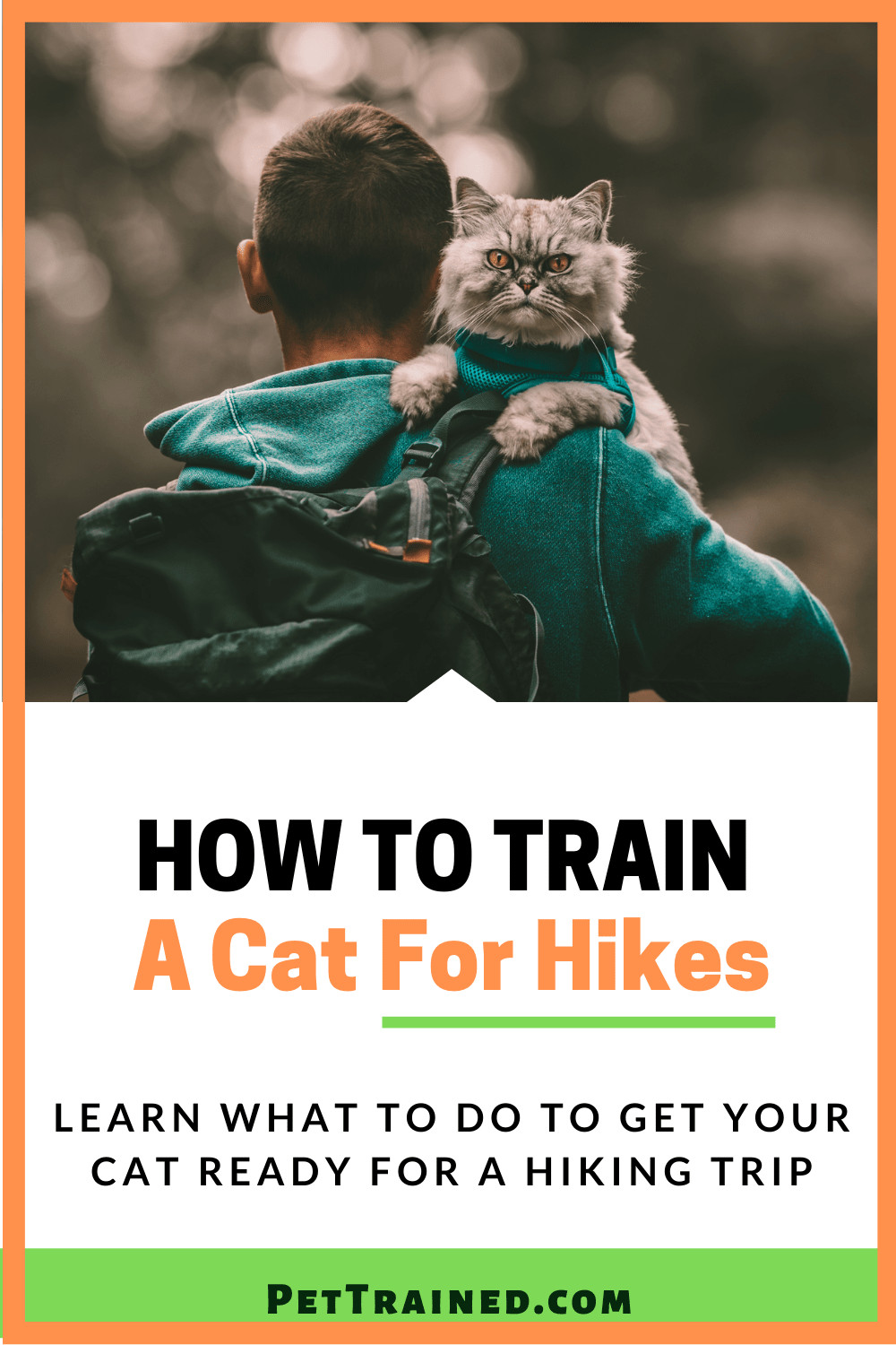 how to hike with your cat