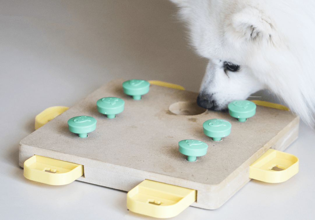 puzzle games to play with dogs inside