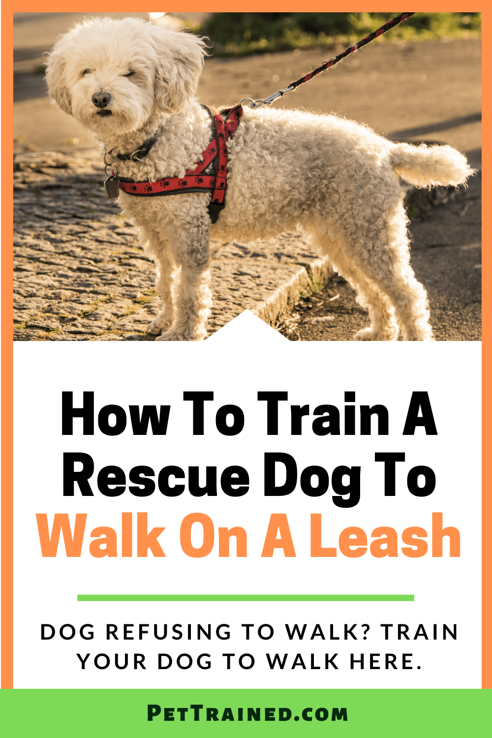 How to teach a rescue dog to walk on a leash