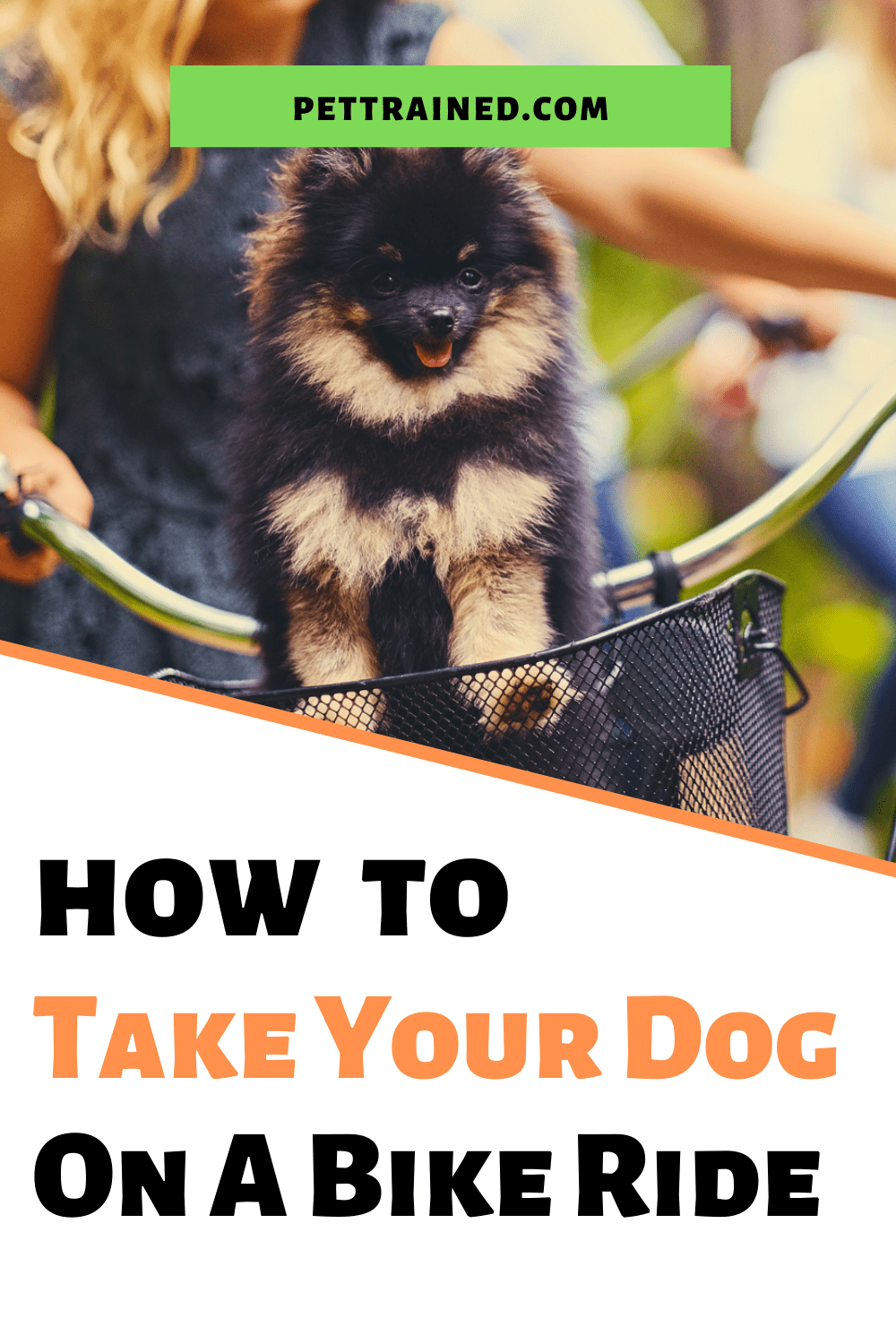 How to train your dog to bike with you for fun