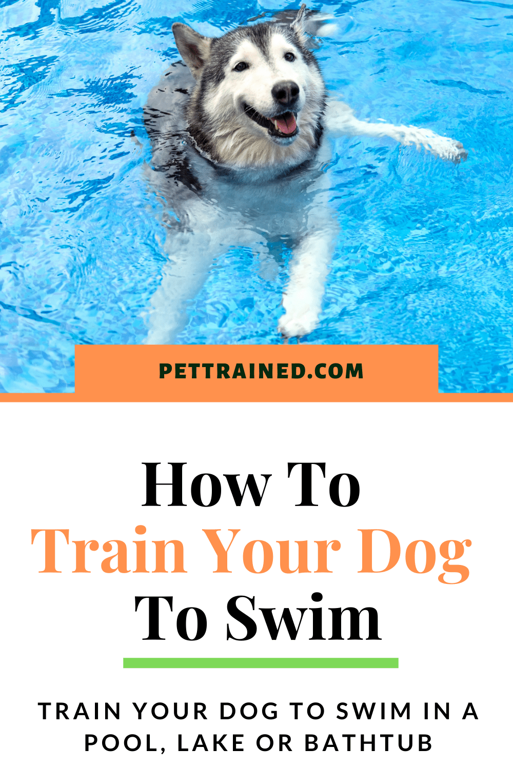 Train my dog to swim in a bathtub