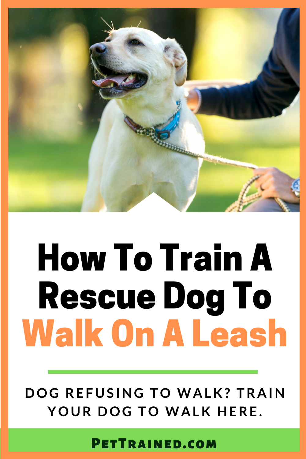 dog training tips to teach adopted dog to walk on a leash