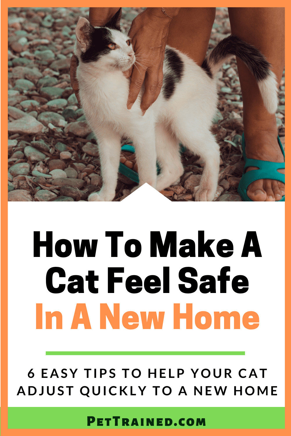 how to make your cat comfortable in a new house