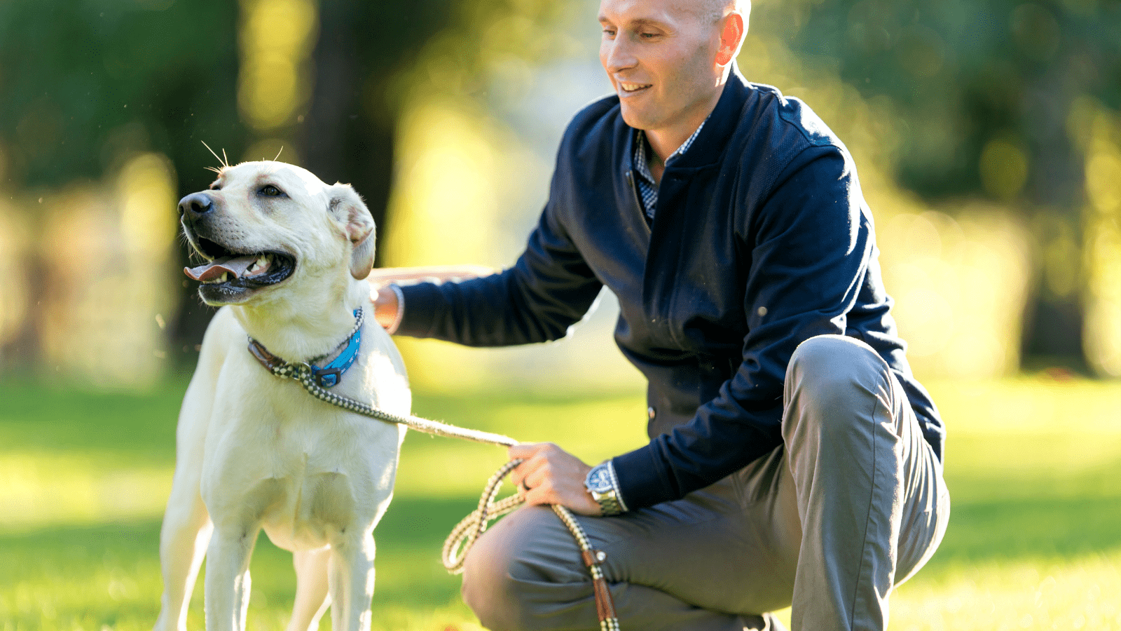 how to teach a rescue dog to leash walk