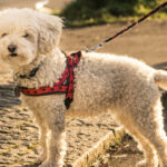 How To Train A Rescue Dog To Walk On A Leash