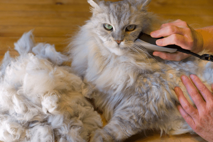 Best Clippers for matted fur in cats