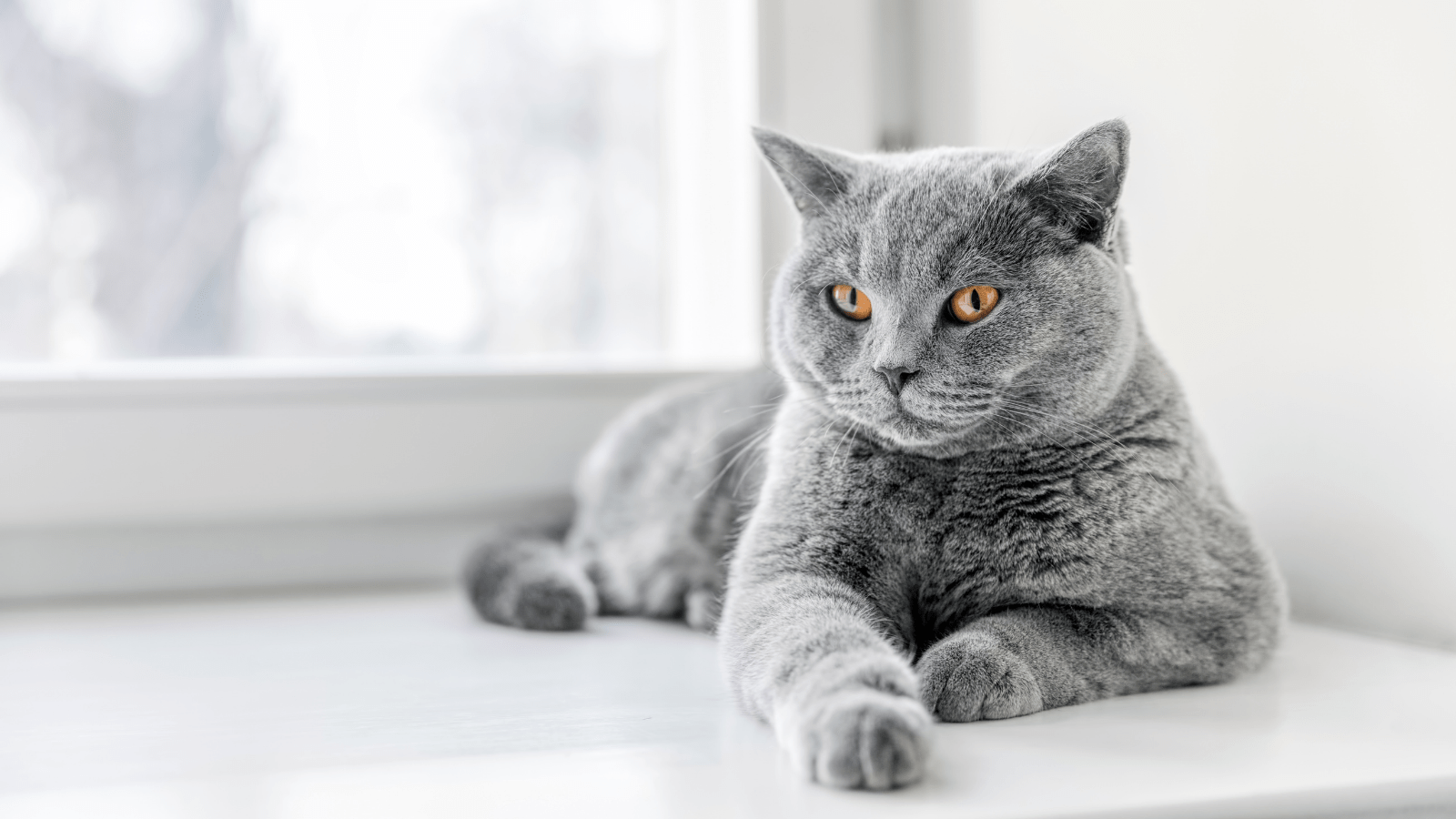 How To Train A Cat To Be Well-Behaved