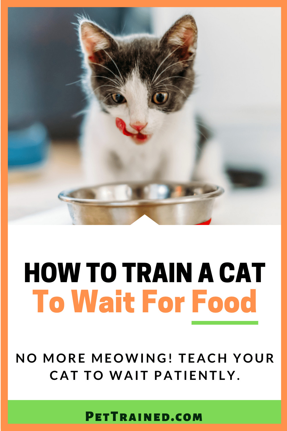 How to train a cat to wait for meals