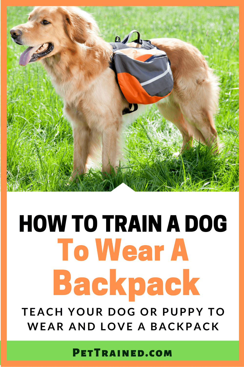 How to train a puppy to wear a backpack from today