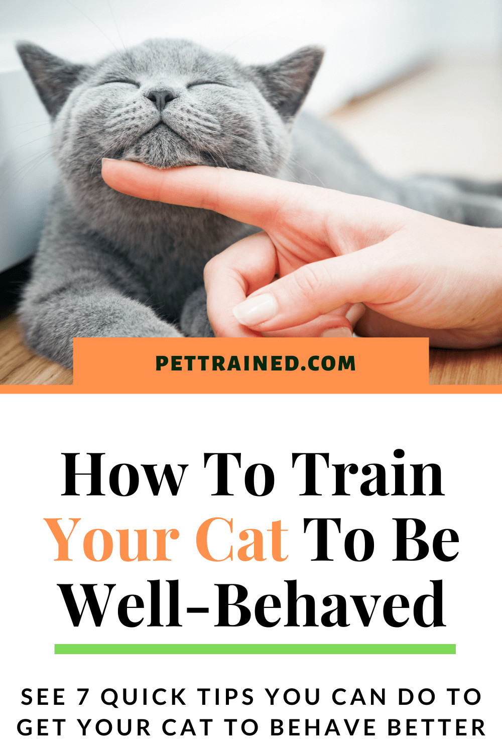 Train a cat to behave well