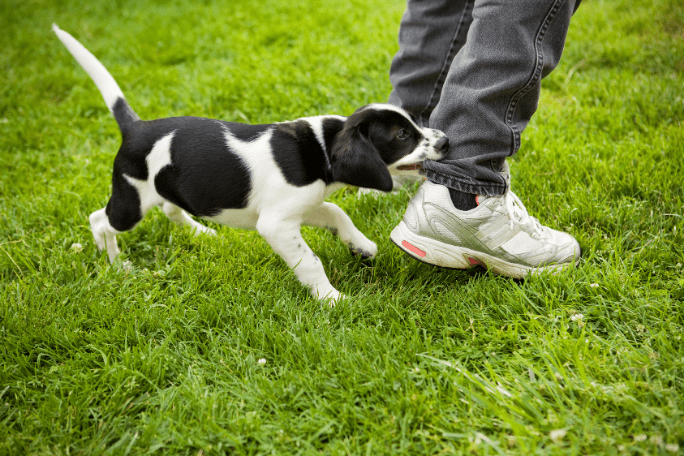 How To Stop A Puppy From Biting My Child