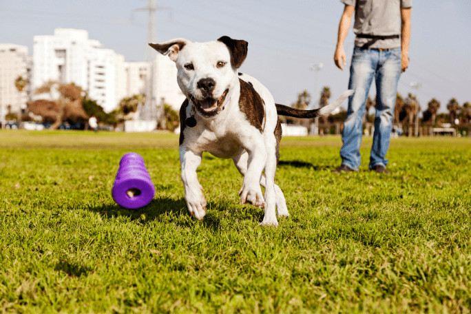 how to stop my dog from biting my child through exercise