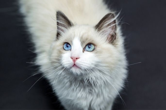Can You Train A Deaf Cat To Come When Called