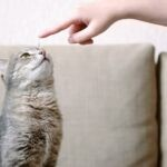 How To Train A Cat To Come When Called